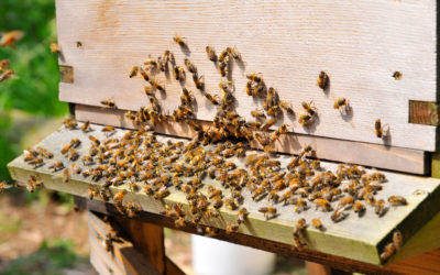 Charity buzzing over funding to bring joys of beekeeping to people of all ages and abilities
