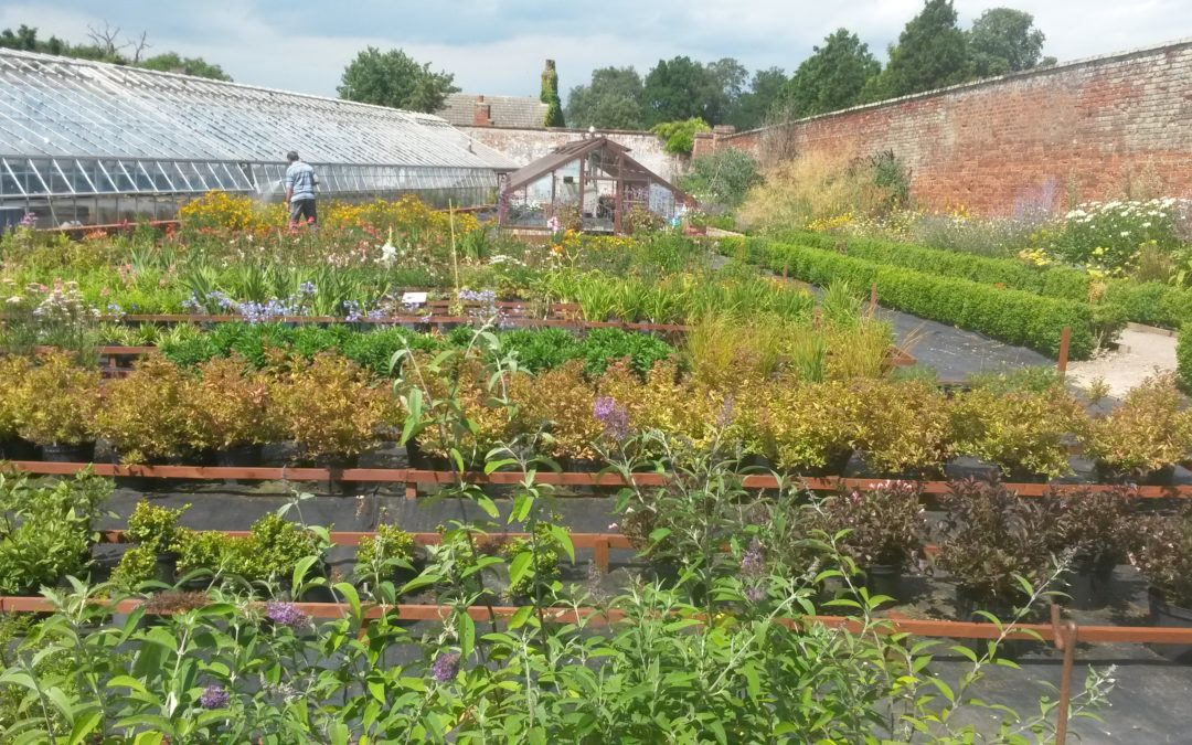 Plants for Sale at Chantry Walled Garden