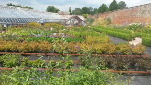 Plants for Sale at Chantry Walled Garden @ Chantry Walled Garden | United Kingdom
