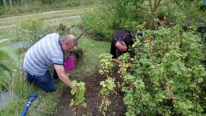Volunteering at The People's Community Garden @ The People's Community Garden | United Kingdom
