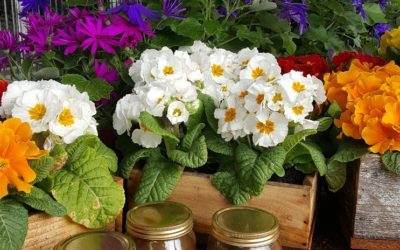 Spring is springing at community market