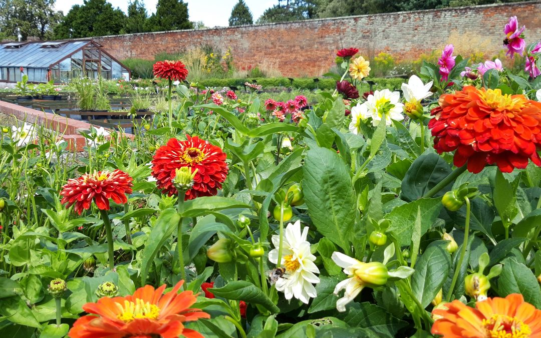 Autumn plant sale at charity walled garden