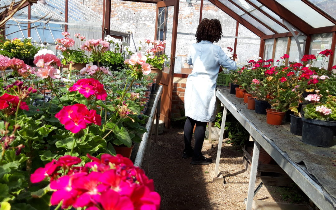 Community run plant nursery re-opens to public