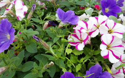 Visit the ActivLives plant nursery this Spring