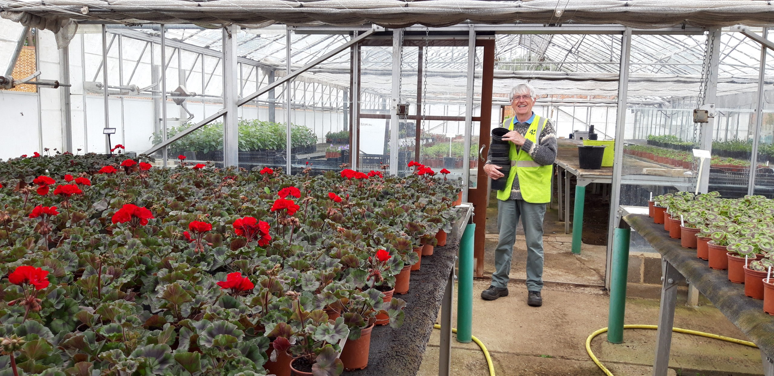 An ActivLives volunteer stands in the green house at Chantry Walled Garden
