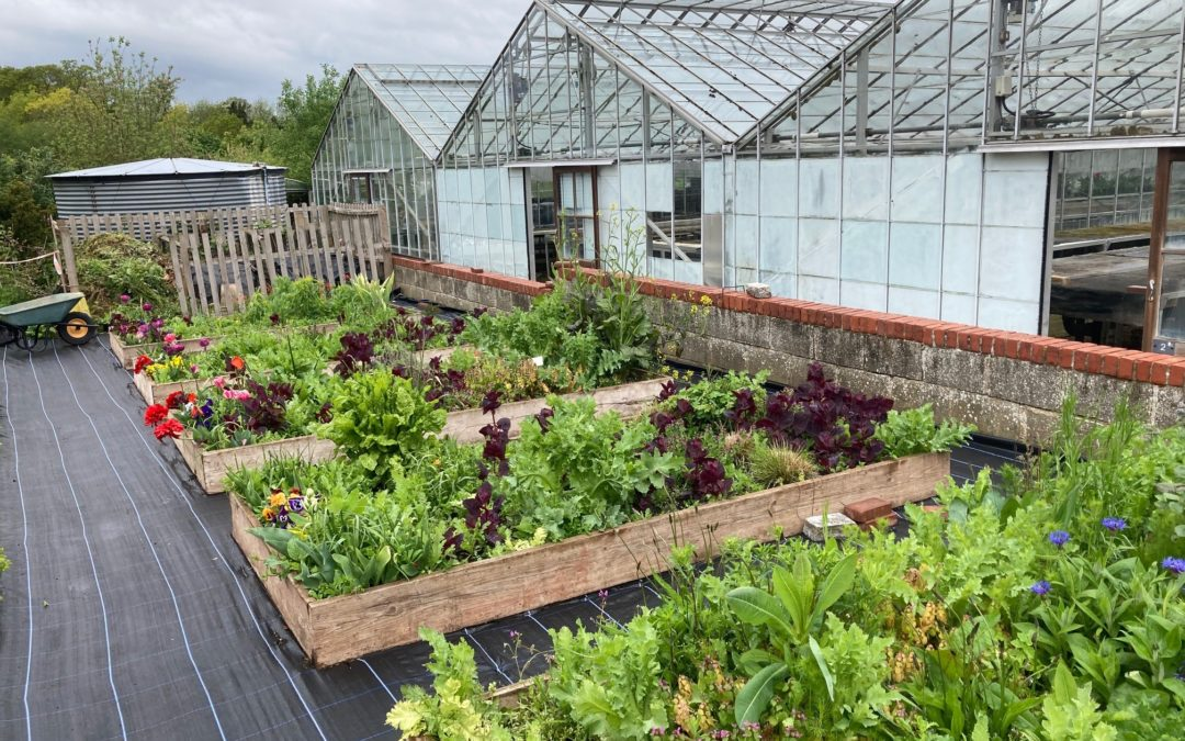 Fill gaps in your garden at our charity plant sale